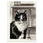 Pet portrait of Rowdy the cat
