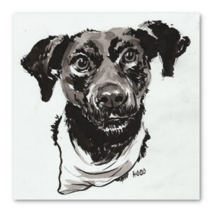 Pet portrait of Hobo the dog